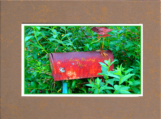 Picture of old mail box in the midst of green folage with saying on box,