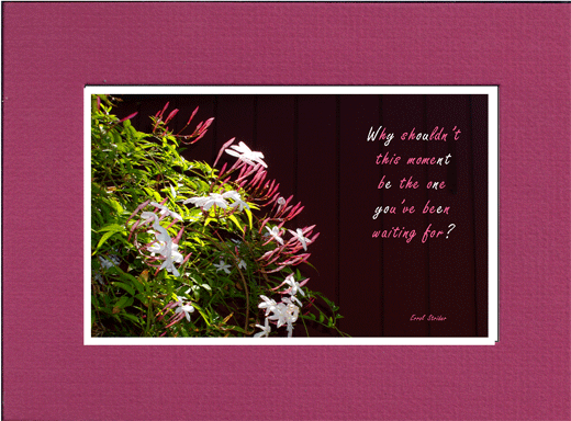 Picture of flowers with saying,