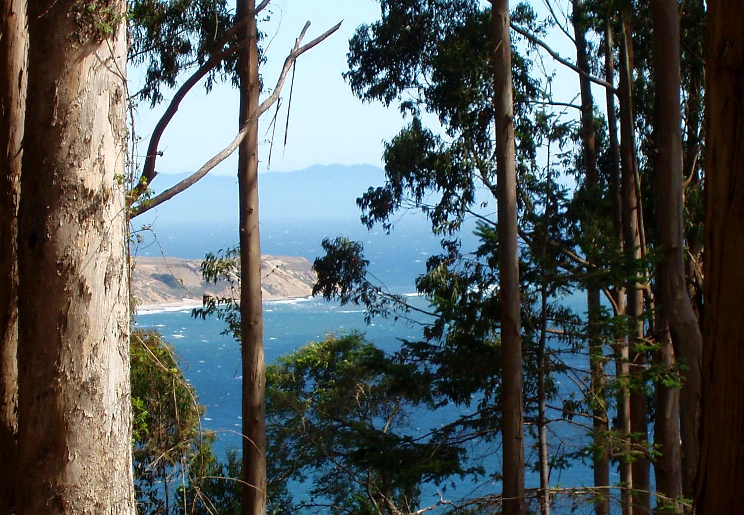 Bass Lake ocean thru trees