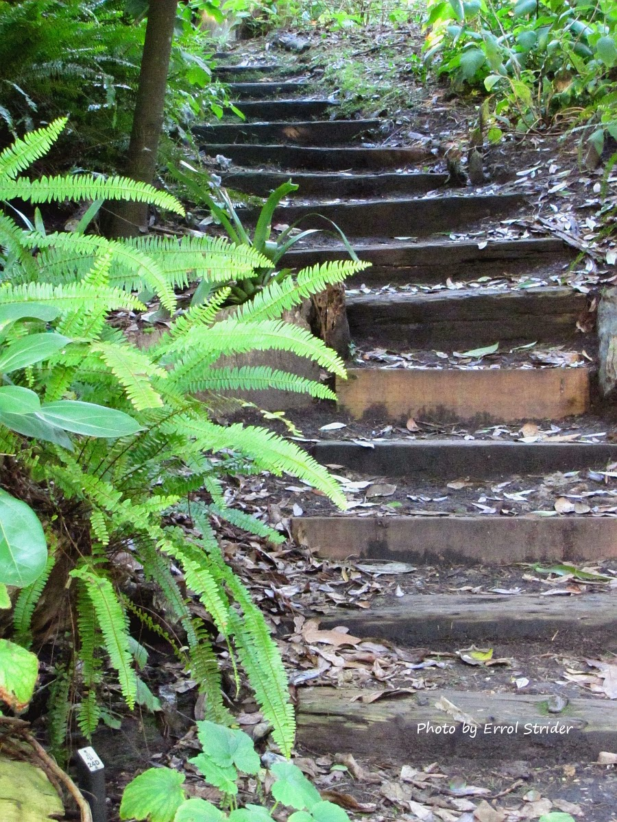 Stairs with plants outside